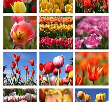Tulip collage by snehit