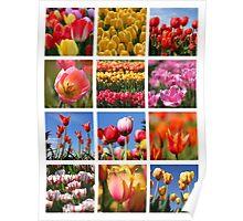 Tulip collage Poster