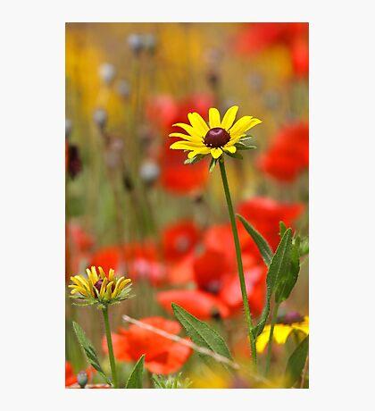Flower Garden Photographic Print