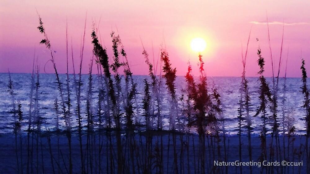 Florida's, Warm Glow by NatureGreeting Cards ©ccwri