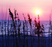 Florida's, Warm Glow by NatureGreeting Cards ©ccwri