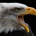 American Bald Headed Eagle by Michelle Lovegrove