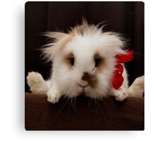 Lion head bunny flying behind a chair Canvas Print