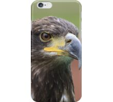 Juvenile Bald Eagle iPhone Case/Skin