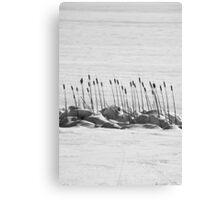 Cattails & Snow Canvas Print