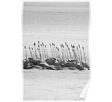Cattails & Snow Poster