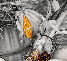 Harvest concept by snehit