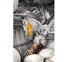 Harvest concept Photographic Print