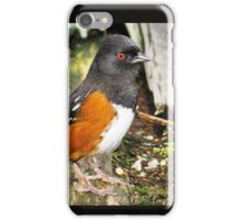 Spotted Towhee  iPhone Case/Skin
