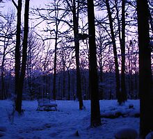 COLD Winter Morning by NatureGreeting Cards ©ccwri