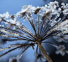 Crystals on golden stalks by Penny V-P