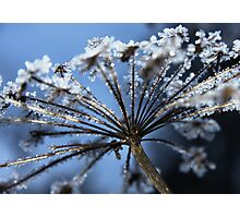 Crystals on golden stalks Photographic Print
