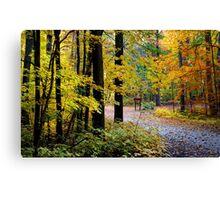 Autumn forest Canvas Print