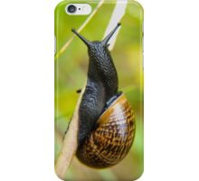 Snail on straw iPhone Case/Skin