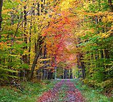 Autumn walk way by snehit