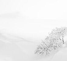 White tree II by thonycity
