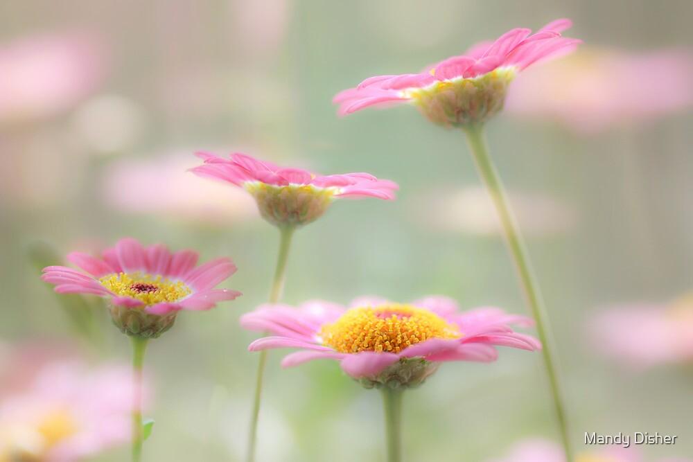 Summer gems by Mandy Disher