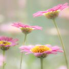 Summer gems by Mandy Disher