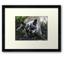 Now I Know Why Pandas Eat So Much Bamboo Framed Print