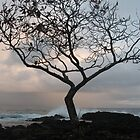 Kaumane Tree at Dawn by ronholiday