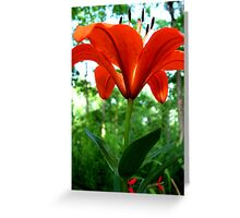 Rising To The Sun Greeting Card