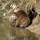 Mother Nutria and Baby  by Bonnie Robert