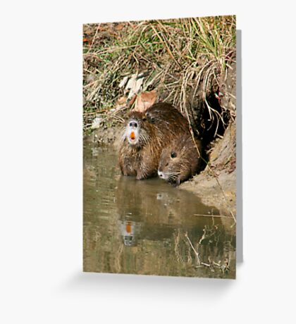 Mother Nutria and Baby  Greeting Card