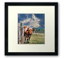 Texas Treasure Framed Print
