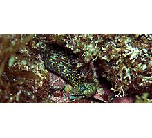 Small Spotted Eel Photographic Print