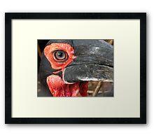 Eye of a Lover Framed Print