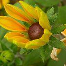 Color de verano..... by cieloverde