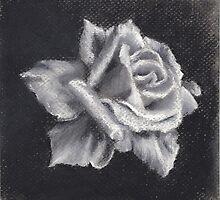 white rose by marcoantonio