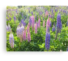 Larkin' About With Lupins Canvas Print
