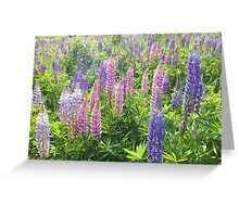 Larkin' About With Lupins Greeting Card
