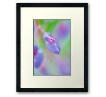 Impressionist Lupin Framed Print