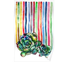 Rainbow Succulents Poster