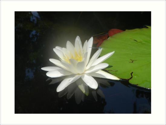 Waterlily with Damselfly by May Lattanzio