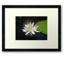 Waterlily with Damselfly Framed Print