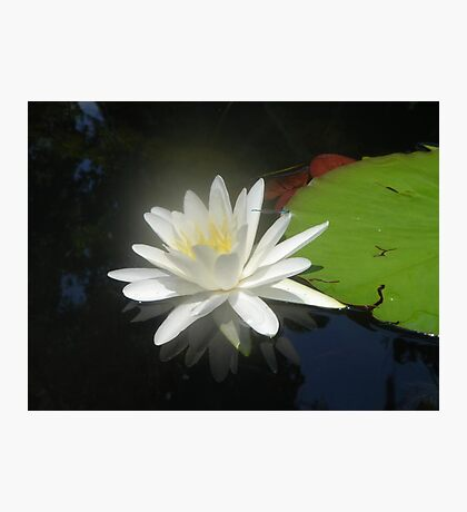 Waterlily with Damselfly Photographic Print