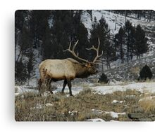 Lord of the Realm #1 Canvas Print