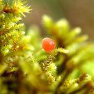 Tiny Mushroom by SKNickel