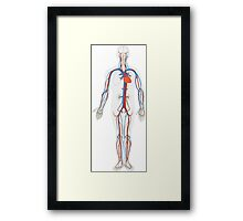 Human Body Anatomy Framed Print