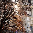 An Autumn Morning at Notre Dame  by AndreaFettweis