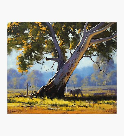 Shady Gum Photographic Print