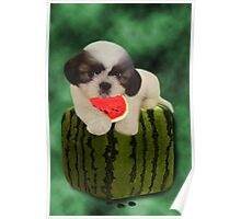 SUMMER TIME SHIH TZU PUPPY ENJOYING THE TASTE OF WATERMELON,JOURNAL--PICTURE,PILLOW,TOTE BAG,ECT.. Poster