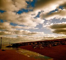 Beach seals by marc melander