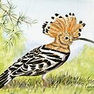 Hoopoe by FranEvans