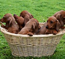 Basket Full Of Mischief by Jenny Brice