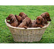 Basket Full Of Mischief Photographic Print