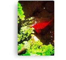 Puzzled Koi in a Pond Canvas Print